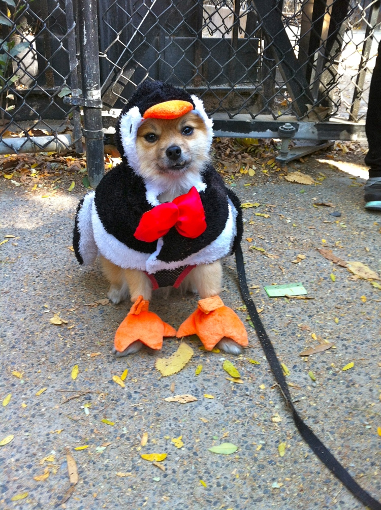 halloween doggy parade